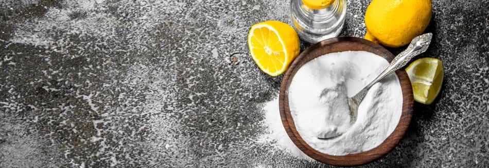Silberfische Bekampfen Tipps Die Plagegeister Einfach